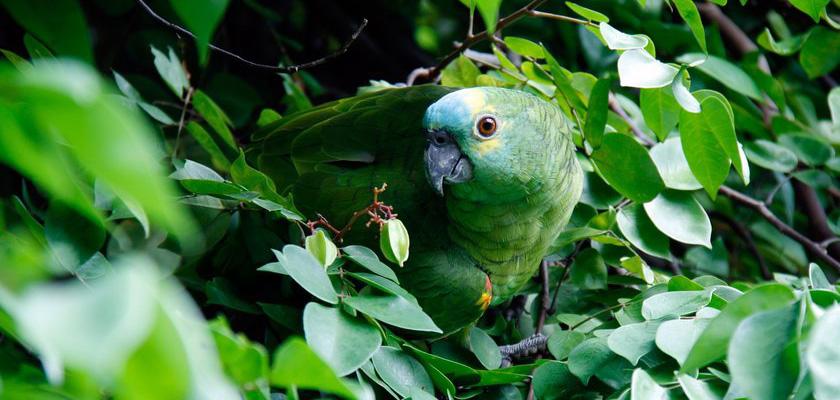 Kraj copoeiry, mocnej kawy i największego lasu deszczowego na świecie, czyli Brazylia okiem Roberta