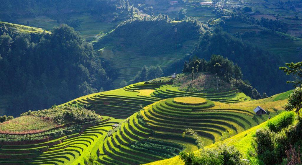Tarasy ryżowe, zatłoczone Hanoi, wszechobecne skutery i stożkowe kapelusze, czyli Wietnam oczami Danieli