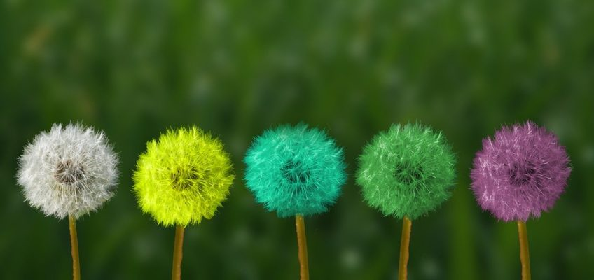 wiśniowe kwiaty randki asia zaloguj się czy są jakieś darmowe chrześcijańskie strony randkowe?